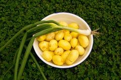 Φρέσκα πατάτες και κρεμμύδι Στοκ Φωτογραφία