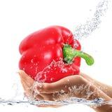 Φρέσκα πιπέρια που εμπίπτουν στο νερό Στοκ εικόνες με δικαίωμα ελεύθερης χρήσης