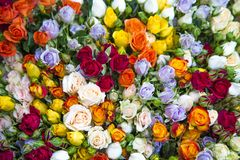 Φρέσκα πολύχρωμα τριαντάφυλλα σε μια ανθοδέσμη με τις πτώσεις νερού στοκ φωτογραφία με δικαίωμα ελεύθερης χρήσης