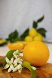 Φρέσκα πορτοκάλια με τα φύλλα και πορτοκαλιά λουλούδια δέντρων στο ξύλο ελιών Στοκ Εικόνες