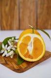Φρέσκα πορτοκάλια με τα φύλλα και πορτοκαλιά λουλούδια δέντρων στο ξύλο ελιών Στοκ φωτογραφία με δικαίωμα ελεύθερης χρήσης