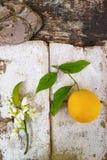 Φρέσκα πορτοκάλια με τα φύλλα και πορτοκαλιά λουλούδια δέντρων στο αγροτικό ξύλο Στοκ Φωτογραφίες