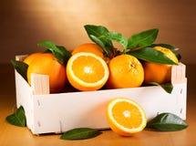 Φρέσκα πορτοκάλια με τα φύλλα Στοκ εικόνες με δικαίωμα ελεύθερης χρήσης