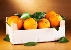 Φρέσκα πορτοκάλια με τα φύλλα Στοκ Φωτογραφία