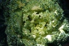 φρέσκα πράσινα λάχανων Στοκ φωτογραφία με δικαίωμα ελεύθερης χρήσης