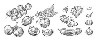 Φρέσκα πράσινα αγγούρια - σύνολο, μισός, φέτες, φύλλο και λουλούδι απεικόνιση αποθεμάτων