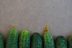 Φρέσκα πράσινα αγγούρια Χρήσιμα λαχανικά και τρόφιμα r Το αγγούρι περιέχει τις βιταμίνες Β, Α στοκ φωτογραφία