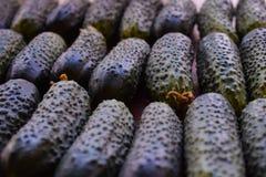 Φρέσκα πράσινα αγγούρια Χρήσιμα λαχανικά και τρόφιμα r Το αγγούρι περιέχει τις βιταμίνες Β, Α στοκ εικόνα με δικαίωμα ελεύθερης χρήσης