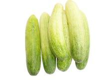 Φρέσκα πράσινα αγγούρια Στοκ Εικόνα