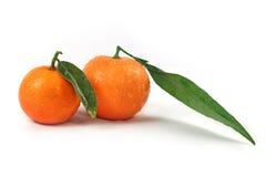 φρέσκα πράσινα απομονωμένα πορτοκάλια φύλλων Στοκ φωτογραφία με δικαίωμα ελεύθερης χρήσης