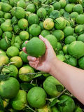 Φρέσκα πράσινα γλυκά πορτοκάλια από το οργανικό αγρόκτημα Στοκ Φωτογραφίες