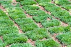 Φρέσκα πράσινα κεραμίδια χλόης Στοκ Εικόνες