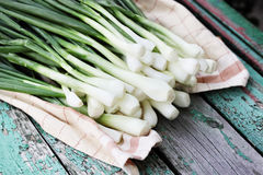 φρέσκα πράσινα κρεμμύδια Στοκ Φωτογραφία