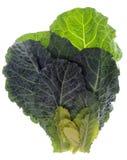φρέσκα πράσινα λάχανων Στοκ Φωτογραφίες