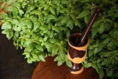 Φρέσκα πράσινα οργανικά φύλλα μεντών στο θάμνο με το κονίαμα και το γουδοχέρι στοκ εικόνα