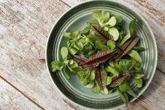Φρέσκα πράσινα σαλάτα και sorrel Στοκ φωτογραφίες με δικαίωμα ελεύθερης χρήσης