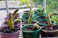 Φρέσκα πράσινα σπορόφυτα στοκ εικόνες με δικαίωμα ελεύθερης χρήσης