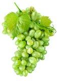 Φρέσκα πράσινα σταφύλια με τα φρούτα συγκομιδών φύλλων στοκ εικόνα με δικαίωμα ελεύθερης χρήσης