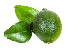 Φρέσκα πράσινα φρούτα ασβέστη kaffir με τα φύλλα που απομονώνονται Στοκ φωτογραφία με δικαίωμα ελεύθερης χρήσης