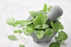 Φρέσκα πράσινα φύλλα βασιλικού στο γκρίζο κονίαμα πετρών στο άσπρο υπόβαθρο Στοκ Εικόνες