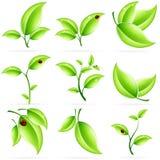 φρέσκα πράσινα φύλλα εικονιδίων που τίθενται Στοκ Εικόνες