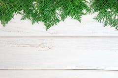 Φρέσκα πράσινα φύλλα πεύκων, ασιατικό Arborvitae, orientalis Thuja Στοκ φωτογραφία με δικαίωμα ελεύθερης χρήσης