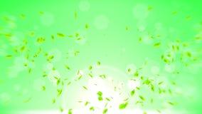 Φρέσκα πράσινα φύλλα που αφορούν το πράσινο υπόβαθρο Κομφετί φύλλων CG Ζωτικότητα βρόχων ελεύθερη απεικόνιση δικαιώματος