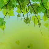 Φρέσκα πράσινα φύλλα στη φυσική ανασκόπηση. Στοκ Φωτογραφίες