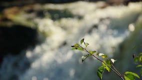 Φρέσκα πράσινα φύλλα, ταραχώδες υπόβαθρο χείμαρρων νερού Άνοιξη απόθεμα βίντεο