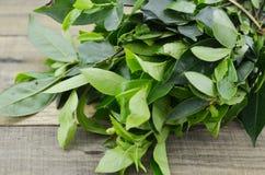 Φρέσκα πράσινα φύλλα τσαγιού στο ξύλινο υπόβαθρο Στοκ Εικόνες