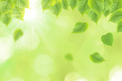 φρέσκα πράσινα φύλλα ανασκ Στοκ φωτογραφία με δικαίωμα ελεύθερης χρήσης