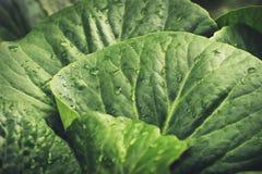Φρέσκα πράσινα φύλλα και λαχανικά Στοκ Φωτογραφία