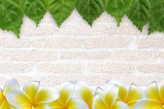 Φρέσκα πράσινα φύλλα και λουλούδι Στοκ εικόνες με δικαίωμα ελεύθερης χρήσης