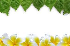 Φρέσκα πράσινα φύλλα και λουλούδι Στοκ Εικόνες