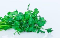 Φρέσκα πράσινα φύλλα κορίανδρου στοκ φωτογραφία με δικαίωμα ελεύθερης χρήσης