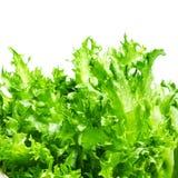 Φρέσκα πράσινα φύλλα σαλάτας μαρουλιού που απομονώνονται στο άσπρο υπόβαθρο Στοκ φωτογραφία με δικαίωμα ελεύθερης χρήσης