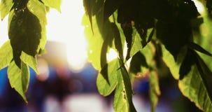 Φρέσκα πράσινα φύλλα στην εστίαση μπροστά από τους περπατώντας πεζούς στο θολωμένο υπόβαθρο φιλμ μικρού μήκους