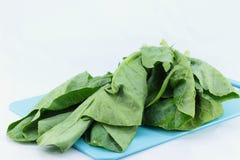 Φρέσκα πράσινα φύλλα των λάχανων Στοκ Εικόνα