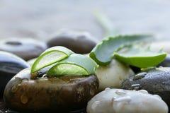 Φρέσκα πράσινα φύλλα aloe Βέρα Στοκ Εικόνα