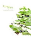 Φρέσκα πράσινα φύλλα, eruca sativa, rucola ή arugula σαλάτας πυραύλων Στοκ φωτογραφίες με δικαίωμα ελεύθερης χρήσης