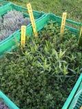 Φρέσκα πράσινα χορτάρια στα πράσινα κιβώτια Στοκ εικόνα με δικαίωμα ελεύθερης χρήσης