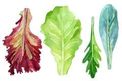 Φρέσκα πράσινα Watercolor καθορισμένα Στοκ εικόνες με δικαίωμα ελεύθερης χρήσης