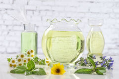 Φρέσκα πράσινες εγκαταστάσεις και λουλούδια Aromatherapy botle του ουσιαστικού πετρελαίου Στοκ εικόνα με δικαίωμα ελεύθερης χρήσης