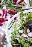 Φρέσκα ραδίκια και μαρούλι, arugula, κάρδαμο, φρέσκα κρεμμύδια Στοκ εικόνα με δικαίωμα ελεύθερης χρήσης