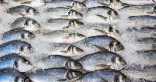 Φρέσκα ρωσικά ψάρια στον πάγο στην αγορά 1 τροφίμων στοκ φωτογραφία με δικαίωμα ελεύθερης χρήσης