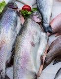 Φρέσκα ρωσικά ψάρια στον πάγο στην αγορά 11 τροφίμων Στοκ Εικόνες