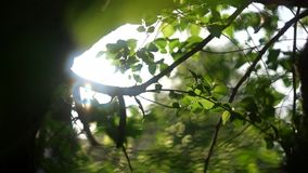 Φρέσκα τραγανά πράσινα φύλλα happyness άνοιξη αναδρομικά φωτισμένα απόθεμα βίντεο