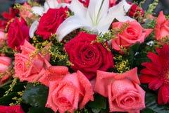 φρέσκα τριαντάφυλλα με τις χάντρες του νερού και babysbreath στοκ φωτογραφία