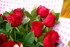 Φρέσκα τριαντάφυλλα Στοκ εικόνα με δικαίωμα ελεύθερης χρήσης