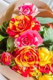 φρέσκα τριαντάφυλλα ανθ&omicron Στοκ Εικόνες